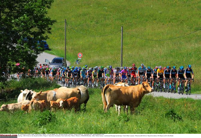 Коровам не нужна подготовка перед Туром. Photo: © Tim de Waele/TDW Sport