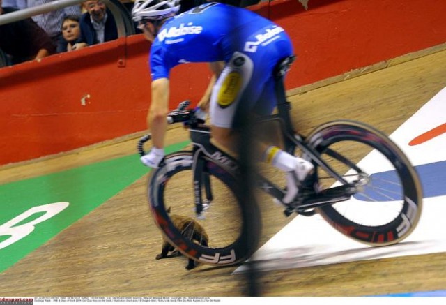 news-shorts-cat-on-the-track-at-gent-six-new-het-nieuwsblad-route--02