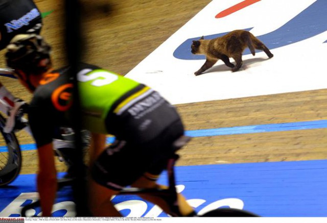 news-shorts-cat-on-the-track-at-gent-six-new-het-nieuwsblad-route--05