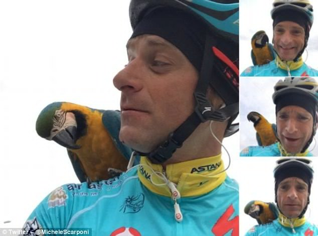 3F7BAA3F00000578-4434900-Scarponi_was_often_seen_riding_in_training_with_a_blue_parrot_na-a-14_1492853757893